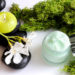 Algi czyli witaminowa bomba