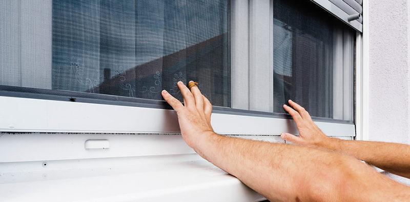 Jak chronić dom przed owadami